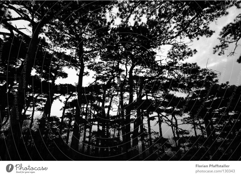 dark forest Forest Dark Austria Tree Black White Tree bark Nature Art Abstract Exterior shot Fisheye Orientation Black & white photo Europe mödling woods trees