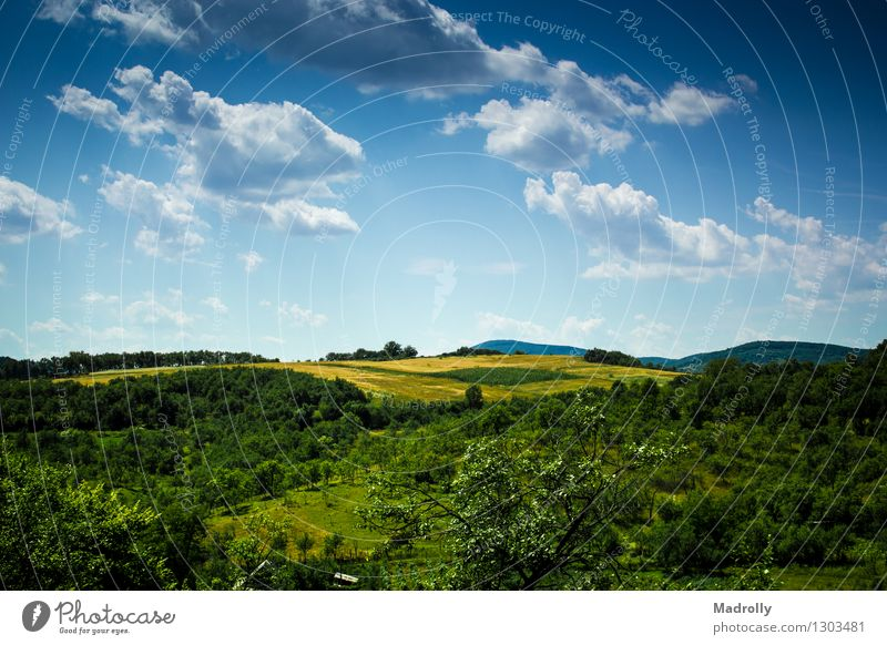 A beautiful view Sky Nature Blue Green Beautiful Colour Summer Tree Landscape Clouds Forest Meadow Grass Natural Freedom Moody