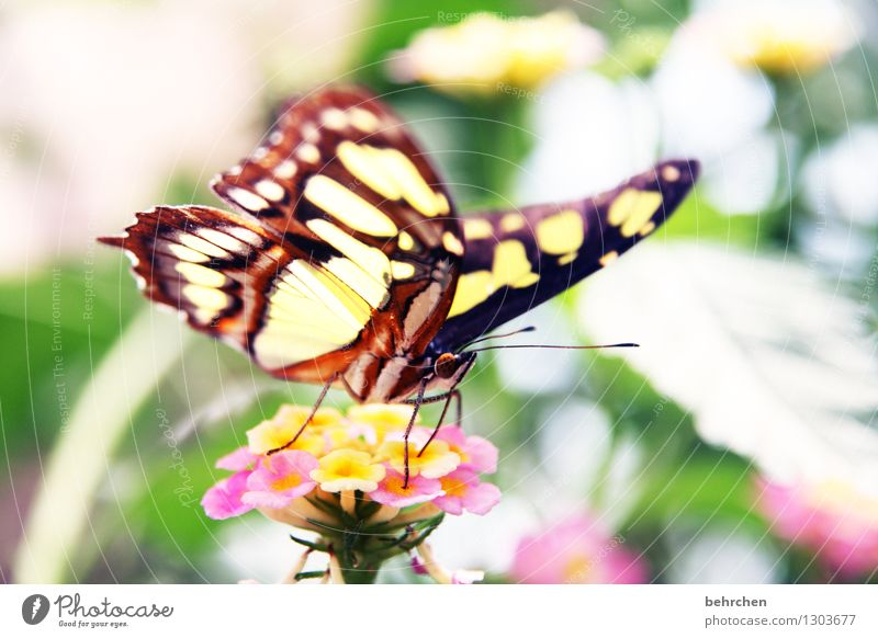 Colourful Nature Plant Animal Flower Bushes Leaf Blossom Garden Park Meadow Wild animal Butterfly Animal face Wing 1 Observe Blossoming Fragrance Flying To feed