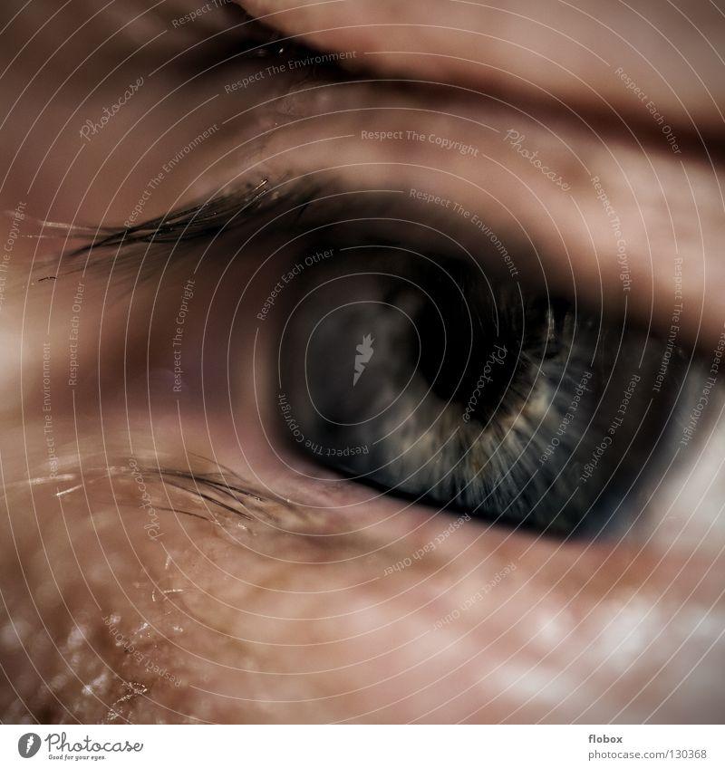 Human being Man Senior citizen Eyes Sadness Skin Masculine Grief Fatigue Wrinkles Boredom Senses Eyelash Lens Pupil Parts of body