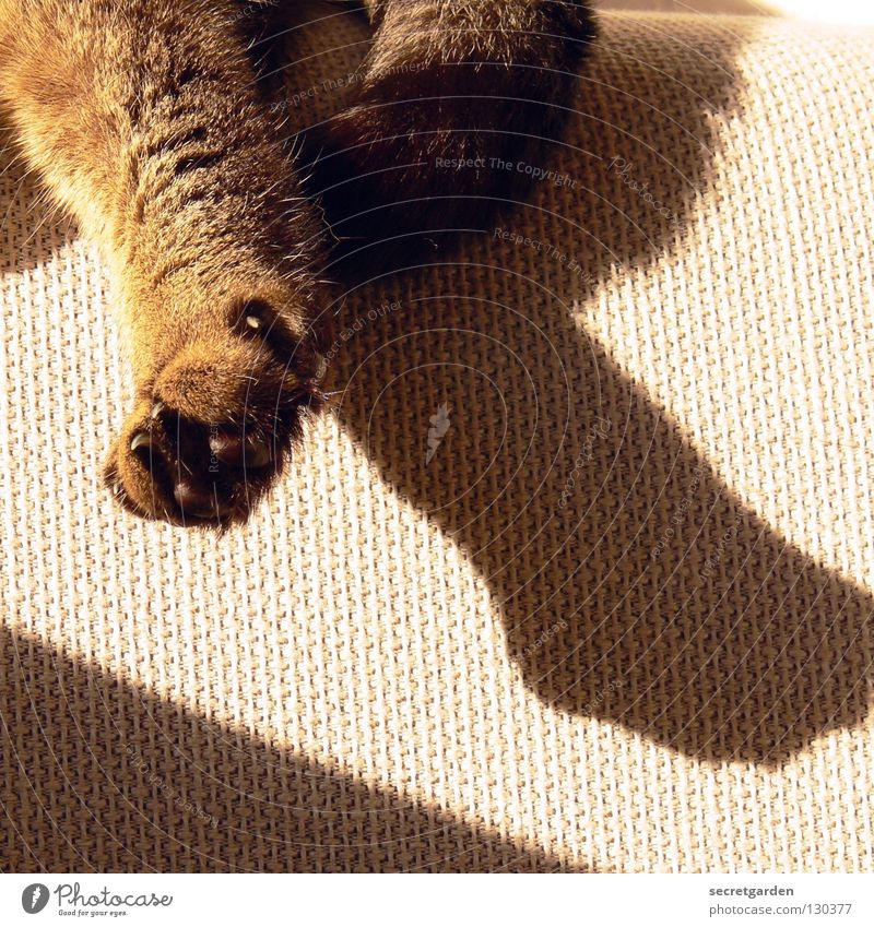 Cat Sun Summer Animal Calm Relaxation Gray Warmth Wait Lie Places Crazy Living or residing Cloth Television Physics