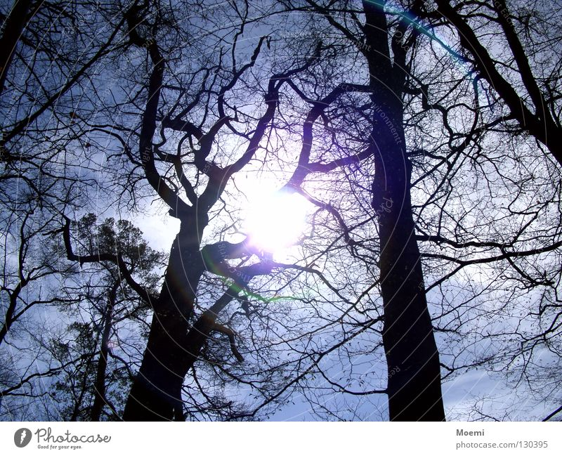 Do you see the sun? Tree Dark Sun Bright Flashy Seeming Sky Clouds Light blue Forest Branch Summer's day Dazzle Joy Refreshment