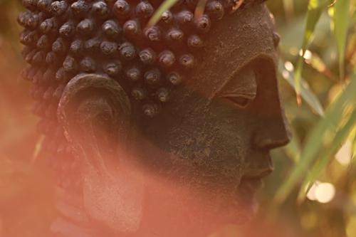 Buddha Harmonious Relaxation Calm Meditation Summer Beautiful Brown Orange Attentive Serene Wisdom Belief Mood lighting Religion and faith Transience