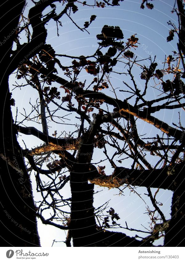 Nature Sky Blue Plant Leaf Brown Perspective Growth Branch Twig Branchage Tree bark