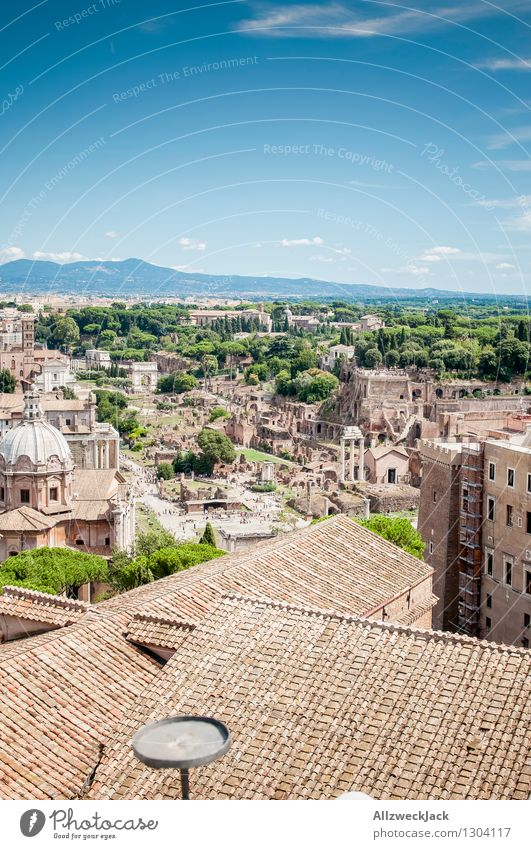 Old Tourism Esthetic Europe Italy Roof Discover Capital city Downtown Tourist Attraction Old town Ruin Maritime Famousness Rome Stone pine