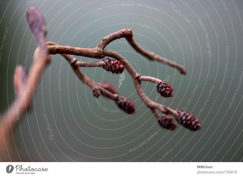 Winter Autumn Spring Park Brown Branch Twig Remainder Shriveled Dried Autumnal