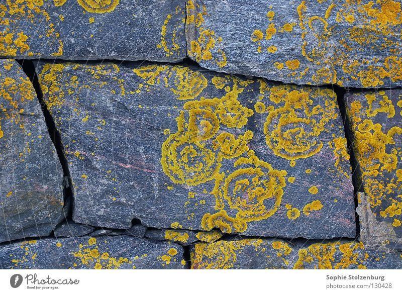 Braid 2 Wall (barrier) Pattern Ornament Natural growth Gray Yellow Plant Stone Minerals Lichen Nature
