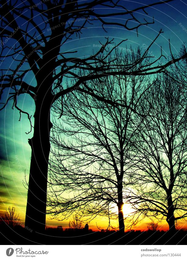 outside the box Sky Light Horizon Sunset Nature Winter Celestial bodies and the universe Elbe sun deciduous evening Skyline Silhouette tree final stage trees