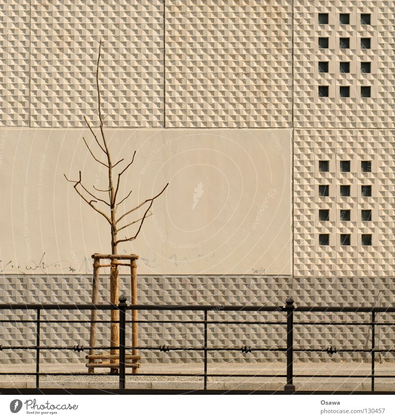 feeding forbidden Tree Prop Wall (building) Wall (barrier) Building House (Residential Structure) Gray White Concrete Relief Prefab construction Enclosure Town