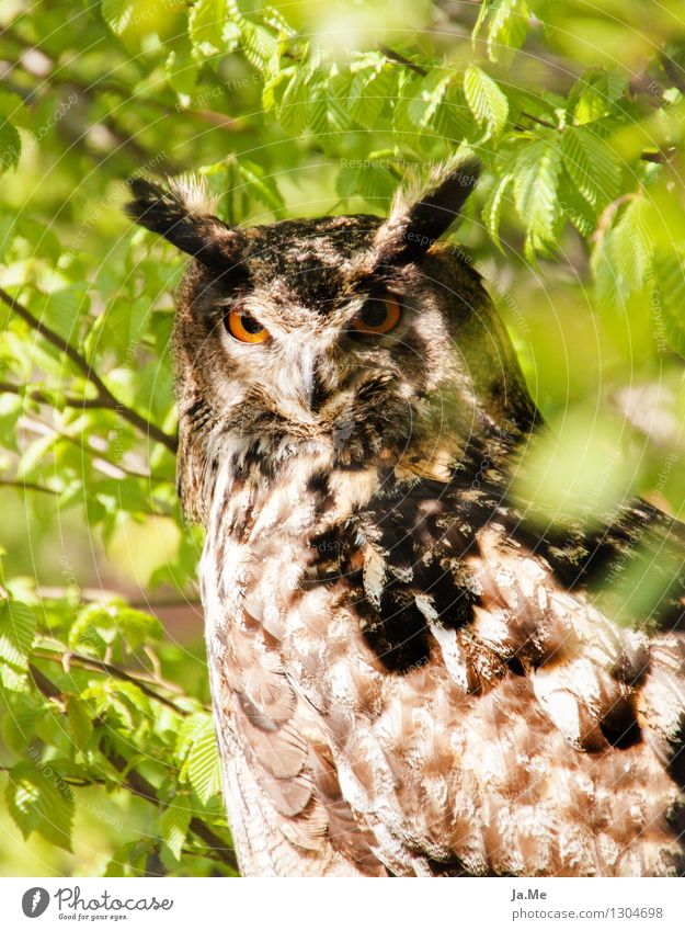 Green Animal Brown Bird Wild animal Wing Observe Animal face Pride Smart Claw Bird of prey Owl birds Eagle owl