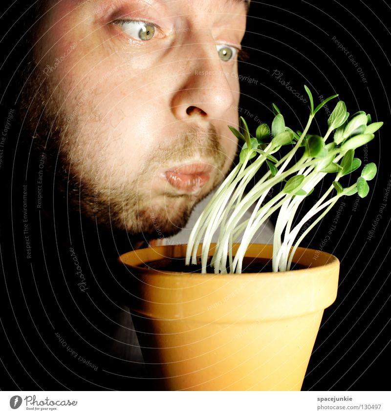 Joy Garden Wind Weather Growth Gale Vegetable Passion Harvest Storm Seed Pot Gardening Comfortless Germ Tornado