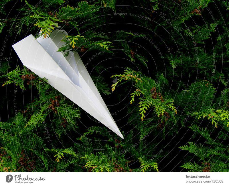 crash landing Airplane Paper plane Crash landing Playing Aim Miss White Green Bushes Airfield Folded Crashed Get caught on Strike Leisure and hobbies Aviation