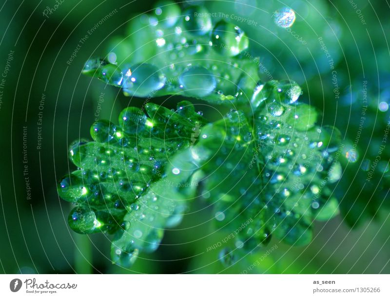dew drops Cold drink Drinking water Design Exotic Healthy Wellness Life Harmonious Senses Cure Spa Summer Garden Nature Plant Elements Water Drops of water