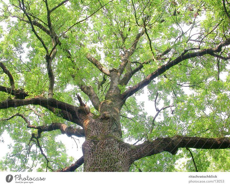habitat Tree Leaf Green Branch