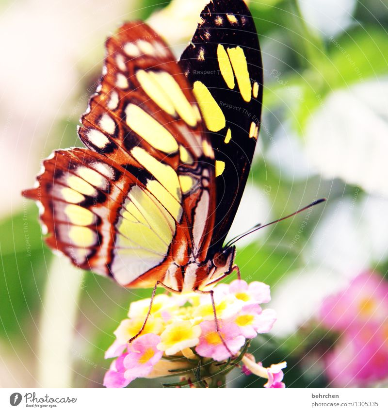 butterfly in the morning... Nature Plant Animal Spring Summer Beautiful weather Flower Leaf Blossom Garden Park Meadow Wild animal Butterfly Wing 1 Blossoming
