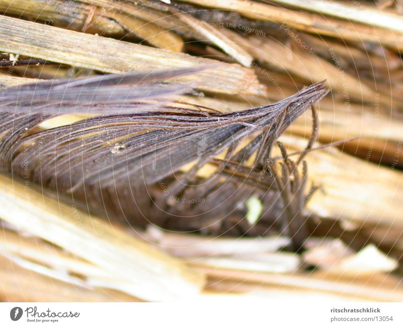 Feather Transience Straw Bale of straw Stubble field