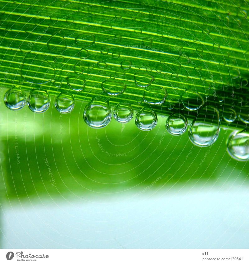 Nature Water Green Plant Leaf Life Cold Air Line Bright Power Healthy Glass Wet Drops of water Force
