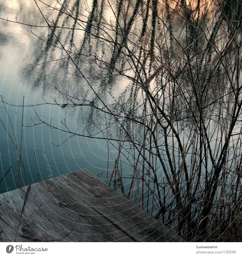 Ophelia Winter Water Lake Wood Sadness Dark Loneliness Transience Surface of water Footbridge Branchage Undergrowth Muddled Sunset Twig Evening Reflection