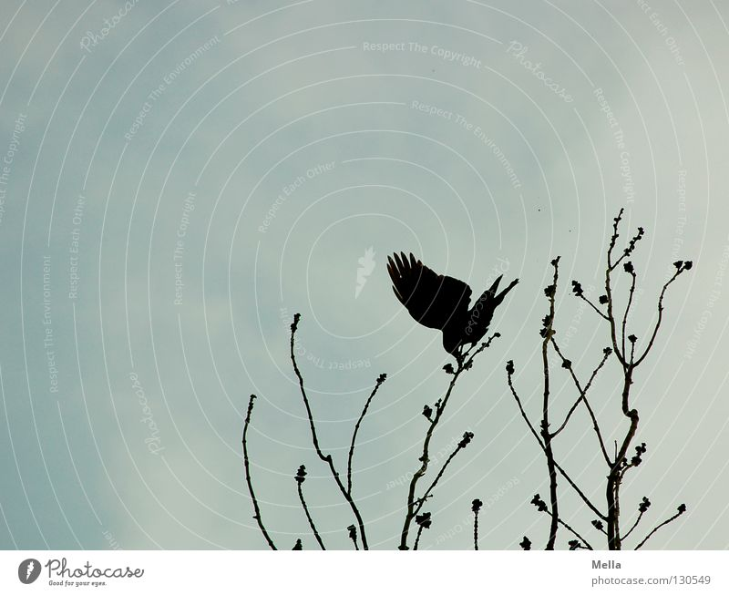Tree Above Contentment Bird Wind Perspective Safety Vantage point Posture Wing Branch Point Gale To hold on Passion Treetop