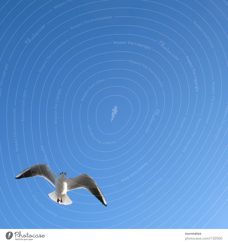 morning gull Seagull Bird Ocean Lake Beach Watercraft White Sandcastle Summer Fresh Vacation & Travel Heavenly Emotions Leisure and hobbies Blue Wind goat