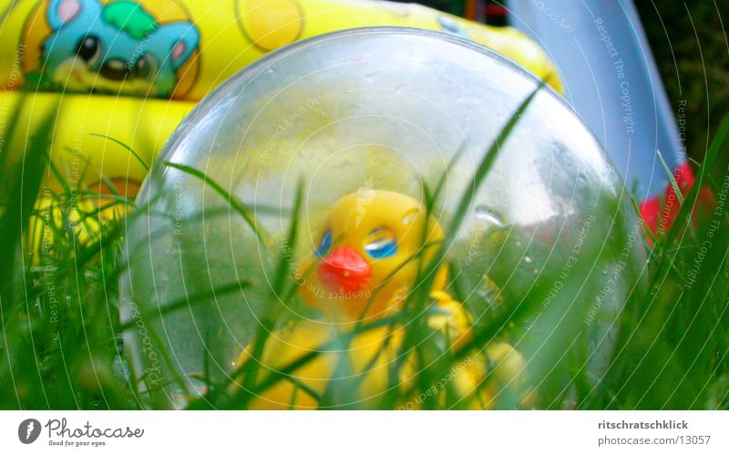 Grass Lawn Things Duck Paddling pool