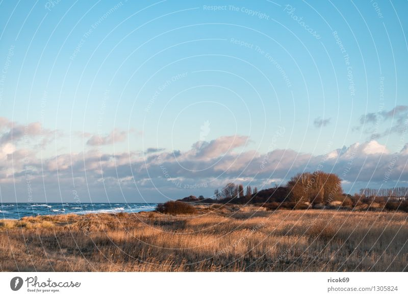 View of the Baltic Sea coast Relaxation Vacation & Travel Beach Ocean Waves Nature Landscape Water Gale Coast Wood Romance Idyll Tourism groynes Dune