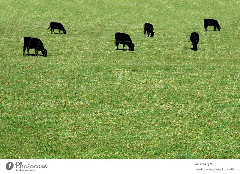 Green Black Dark Industry Farm Agriculture Cow Pasture Mammal Ireland Cattle Livestock breeding Farm animal Dairy cow