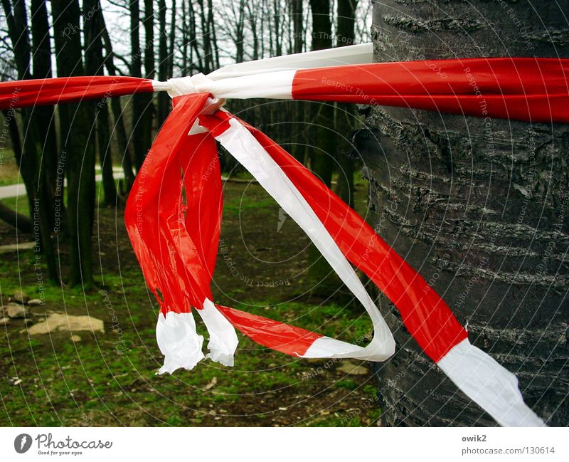 crime scene Environment Nature Tree Forest Lanes & trails Stone Wood Sign Signs and labeling String Knot Hang Red White Barrier Reddish white Protection Plastic