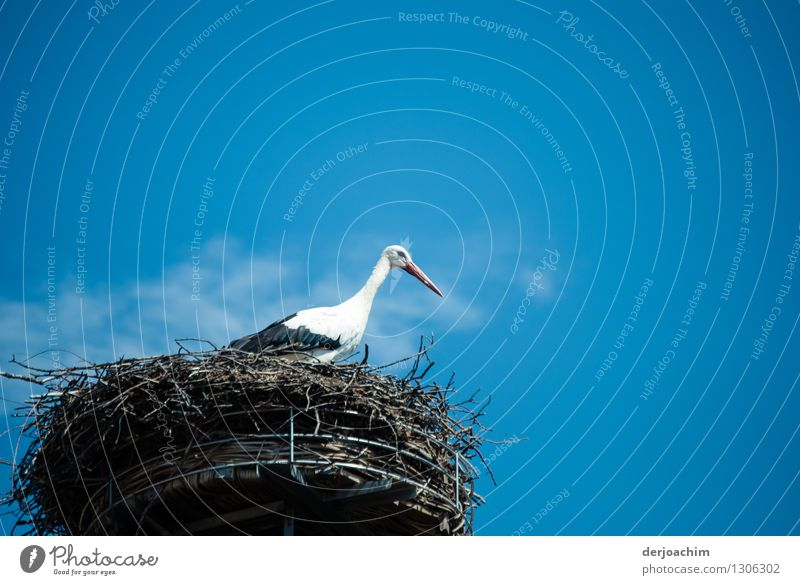 "Encounter with a stork. In his ""dream house"" in Adelsdorf. On his nest in sunshine and blue sky. Harmonious Trip Summer Dream house Environment"
