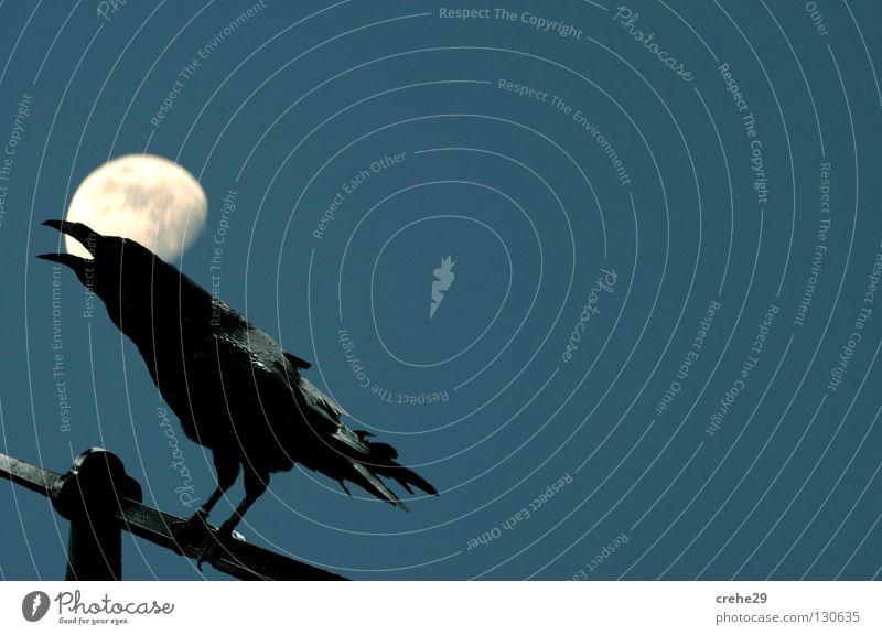 Bremen night shift Crow Raven birds Bird Black Night Twilight Looking Moon Blue Silhouette Evening contrast