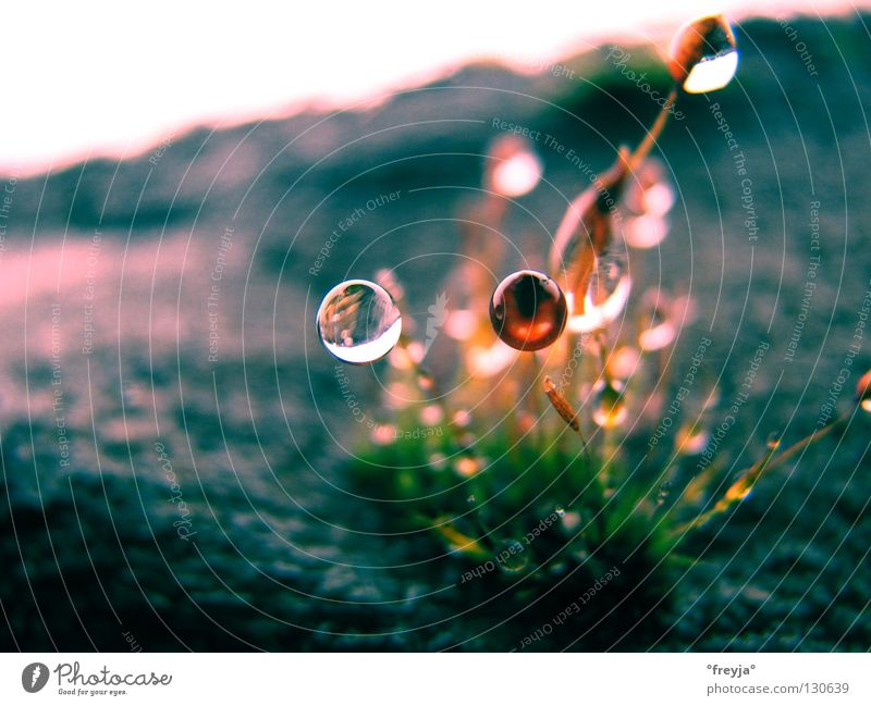 Nothing going on without moss Wet Green Spring Gray Drops of water Water Emotions Stone Life