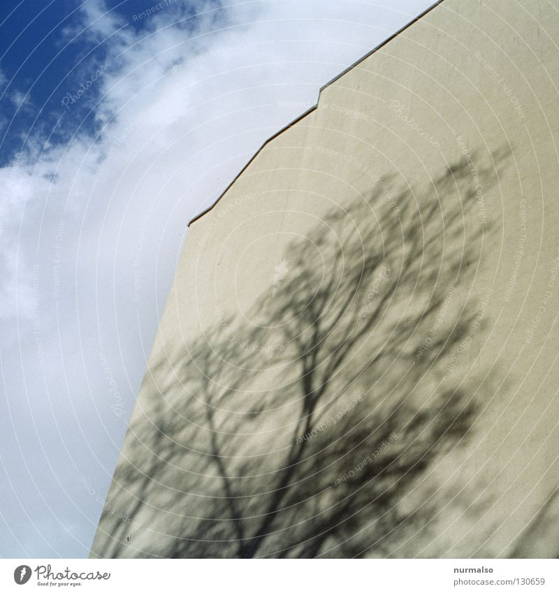 Shadow tree I Tree Wall (building) Facade Clouds Yellow Town house (City: Block of flats) House (Residential Structure) Roof Story Paintwork Leafless Light
