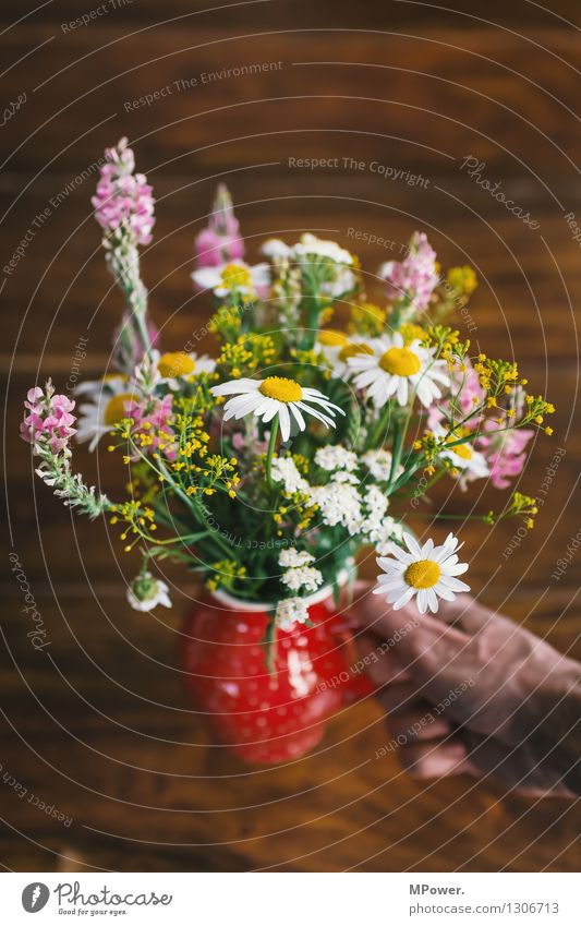 Human being Plant Beautiful Flower Hand Joy Gift Herbs and spices Bouquet Fragrance Wooden table Vase Mother's Day Salutation Spring flower