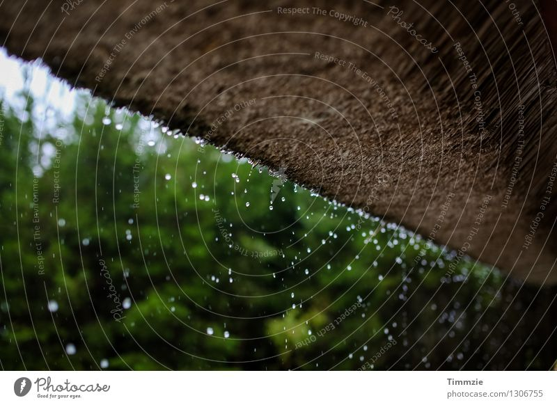 Plant Water Cold Rain Weather Drops of water Roof Hut Bad weather