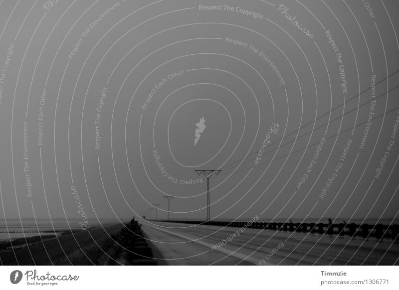 Road to Römö Landscape Weather Bad weather Fog Rain Coast Street Gloomy Longing Wanderlust Loneliness Lanes & trails Denmark Rømø Black & white photo
