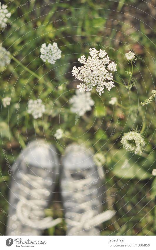 on the other side of the road ... Footwear Sneakers Chucks Feet Field Meadow Grass Flower Common Yarrow Meadow flower Nature Blur