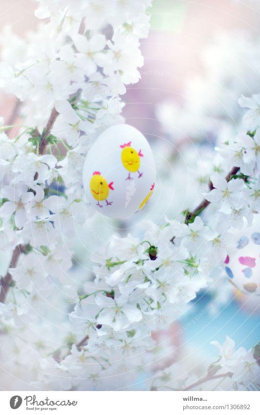 easter egg - chicken running in a sea of flowers Easter Spring Cherry blossom Easter egg White Painted Chick Spring celebration Fragile Deserted
