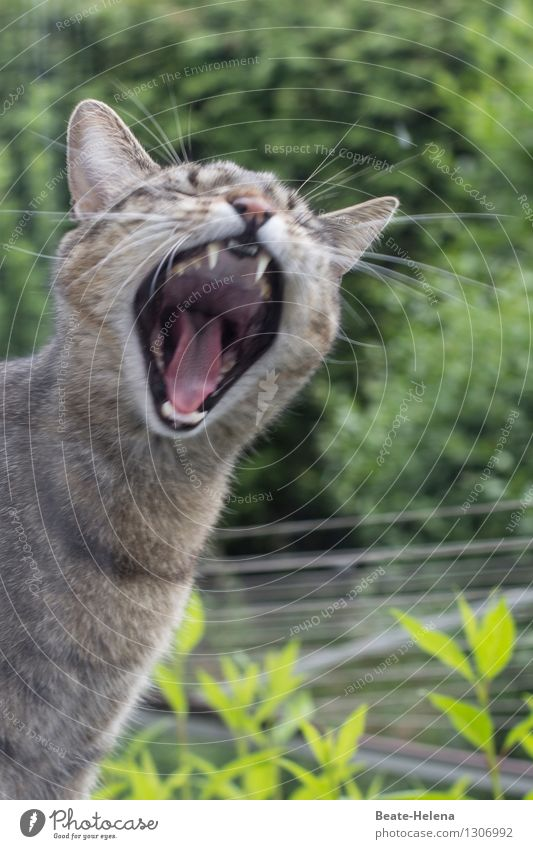 Cat Nature Plant Green Animal Garden Exceptional Brown Fantastic Threat Passion Set of teeth Pet Animal face Scream Muzzle