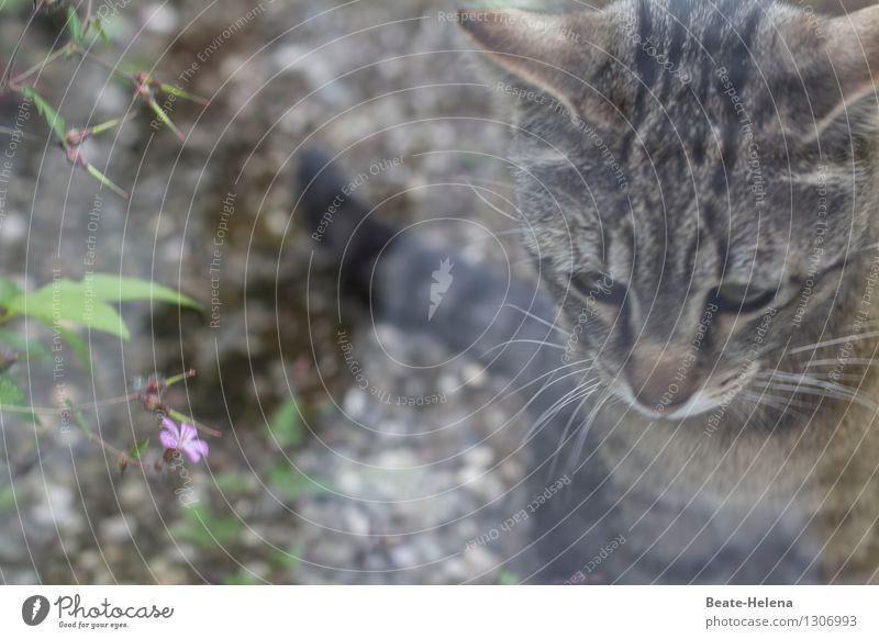 Cat Nature Plant Green Leaf Calm Animal Blossom Lanes & trails Gray Think Garden Pink Dream Contentment Living or residing