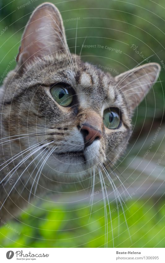 I still understand the world. Life Nature Summer Foliage plant Garden Meadow Animal Pet Cat Animal face Observe Discover Looking Living or residing Friendliness