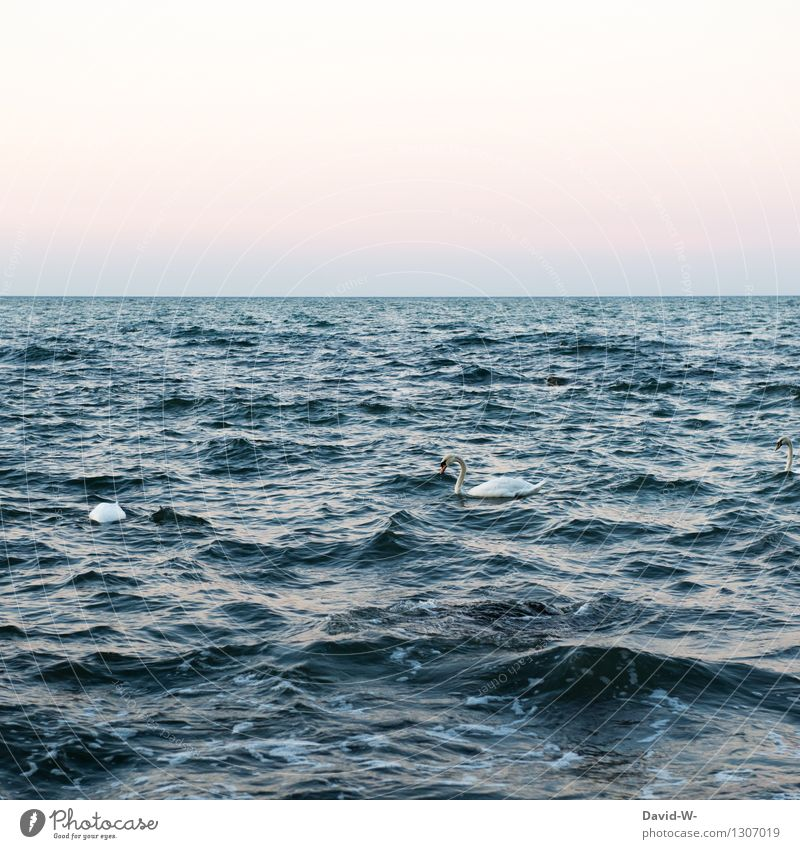 Nature Summer Water Ocean Animal Far-off places Environment Autumn Swimming & Bathing Bird Waves Wild animal Wing Large Group of animals Beautiful weather