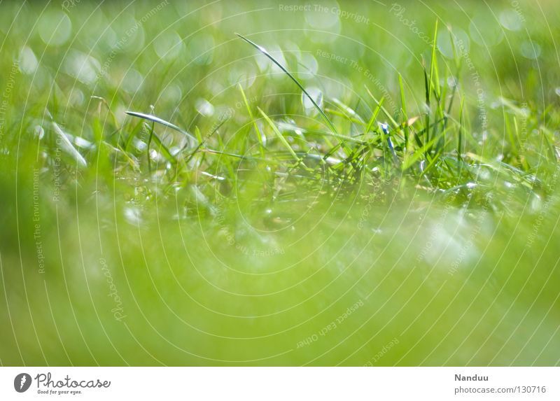 He's coming! Meadow Summer Spring To enjoy Well-being Grass Blade of grass Blur Depth of field Green Fresh Plant Growth Maturing time outside lie around