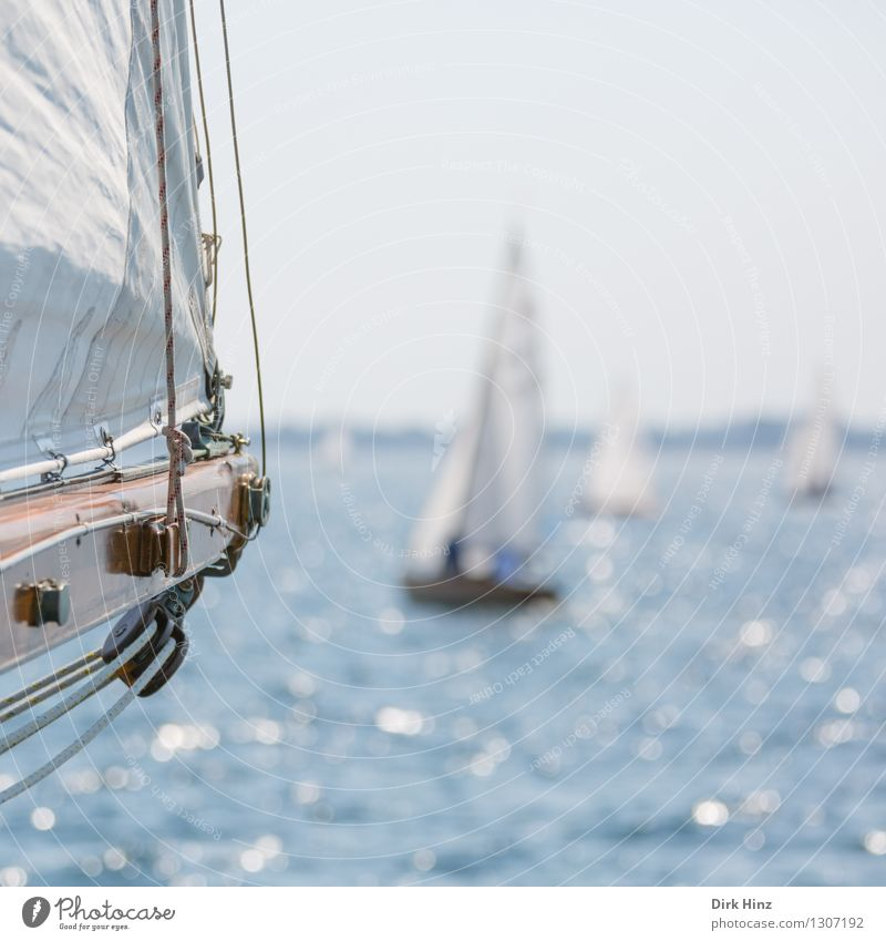 sail view Sailing Yacht Blue Laboe sail tree Sailboat Sailing ship Sailing yacht Sailing trip Sailing vacation Vantage point Rope Water Surface of water