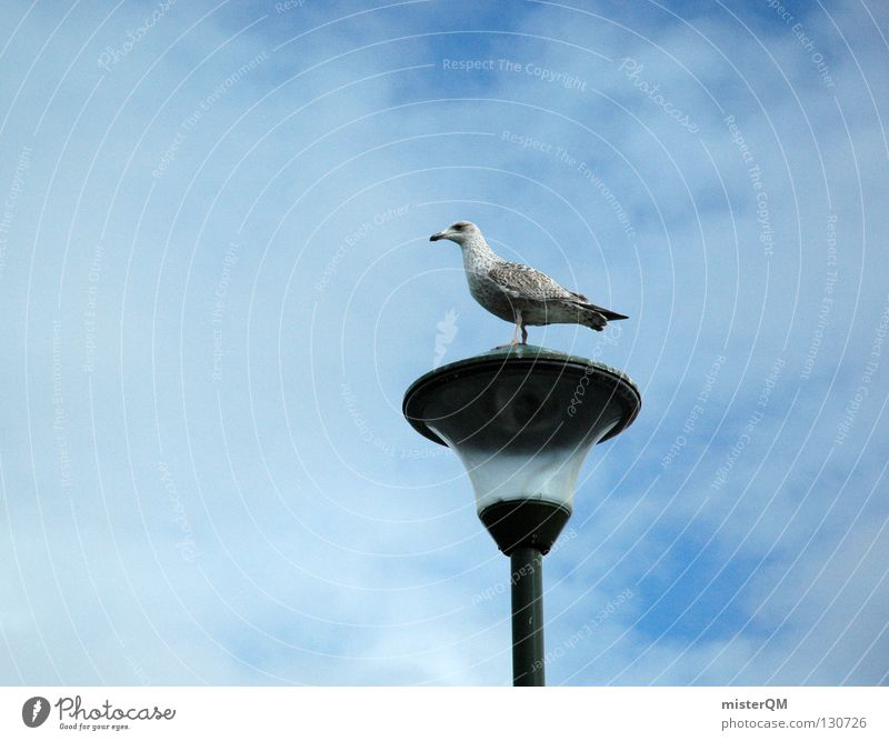 La seagull. Seagull Bird Lamp Break Clouds Ocean Small Black-headed gull  Harbour Beach Coast lower domiciled Glass Sky Partially visible Detail Near