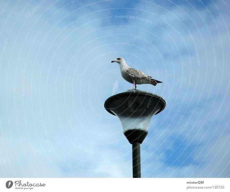 Sky Ocean Beach Clouds Lamp Bird Coast Small Glass Break Near Harbour Seagull Partially visible Black-headed gull