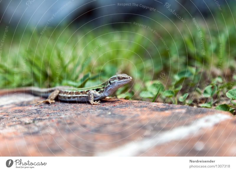 Nature Plant Summer Animal Meadow Grass Earth Wild animal Wait Observe Hunting Reptiles Lizards