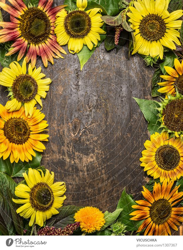 Background with colorful sunflowers Style Design Life Garden Table Nature Plant Summer Autumn Flower Bouquet Retro Yellow Background picture Top Vintage