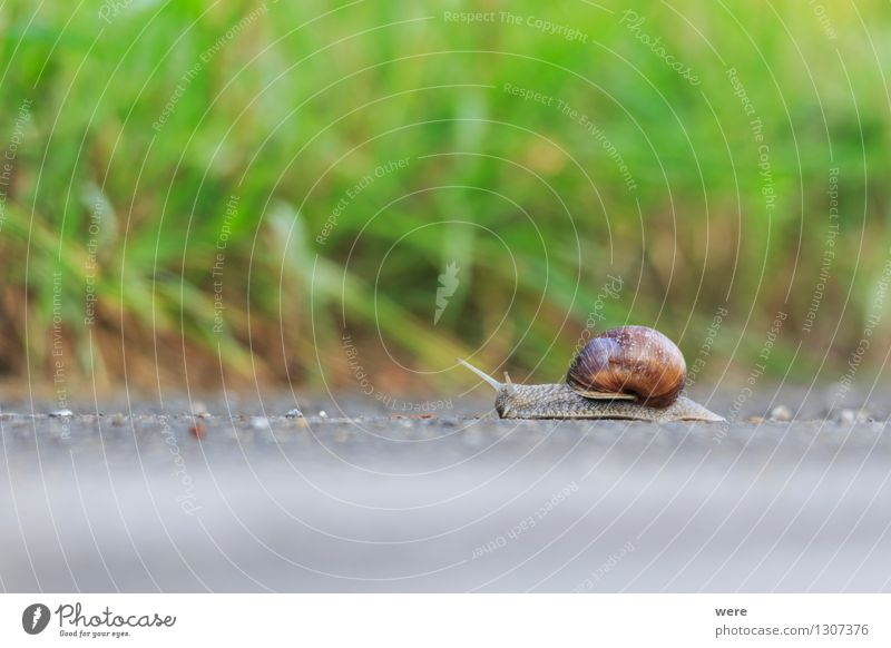 at snail's pace Vacation & Travel Hiking Garden Nature Plant Animal Forest Architecture Lanes & trails Crawl Slimy Environmental protection Target Habitat