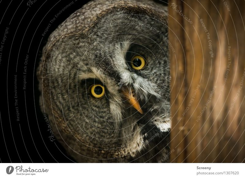 WTF? Nature Animal Wild animal Bird Owl birds 1 Observe Curiosity Safety Interest Nerviness Expectation Testing & Control Concentrate Eyes Beak Hypnotize