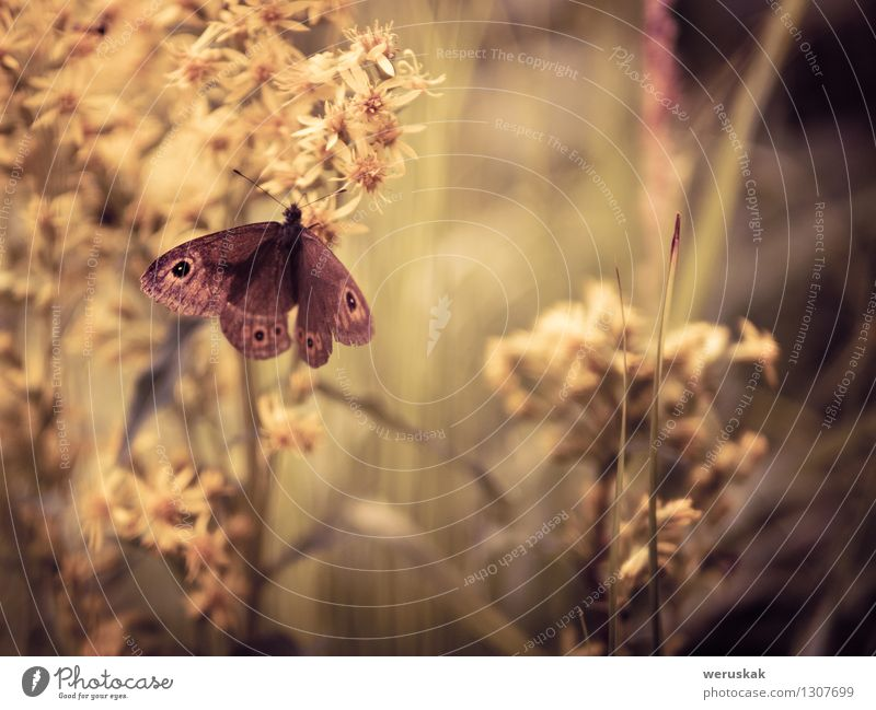 In the embrace of nature Nature Plant Beautiful Relaxation Flower Calm Animal Environment Meadow Grass Moody Dream Contentment Elegant Wild animal Sit